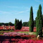 Rote Blütenpracht Schnerverdingen