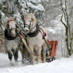 Schlittenfahrt mit Pferden im Wald