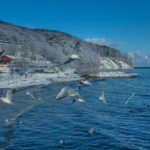 Möwen vor Küste Klif Orlowski