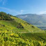 Weinterrassen in Spitz/Wachau